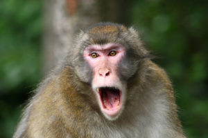 Armed HVAC Repairman Saves Woman from Escaped Monkey Attack